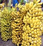 Can-Bananas-make-you-healthy
